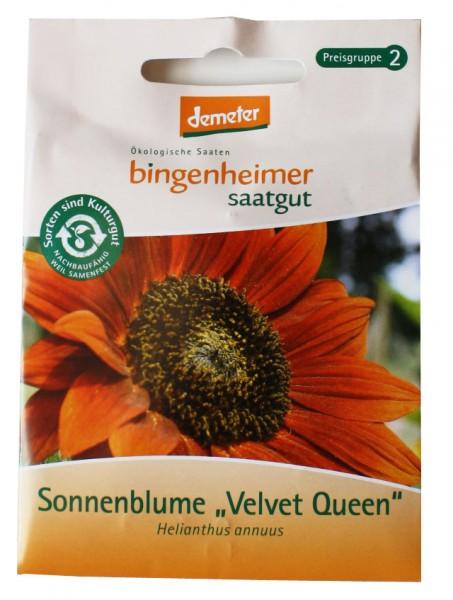 Sonnenblume Velvet Queen (Bio-Saatgut)